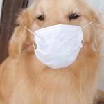 PM2.5警報でも幼児に外遊びさせる?