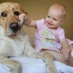 3歳児(幼児)の知能指数値が簡単にわかるやり方 赤ちゃん夜泣き対策も