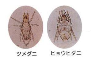 ヒョウヒダニとツメダニ