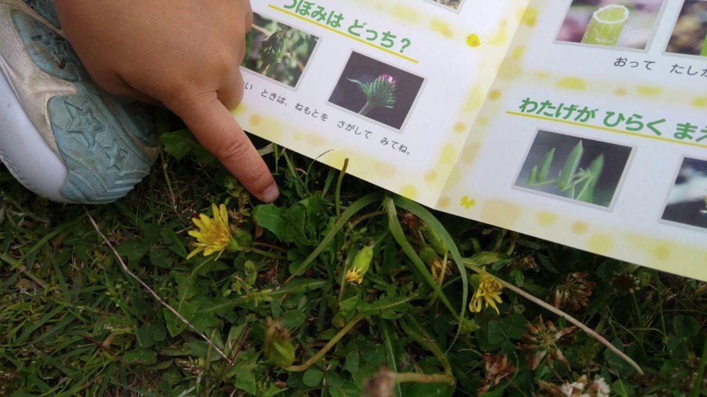 Z会年中体験たんぽぽと葉っぱ